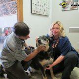 Vetco dog vet services