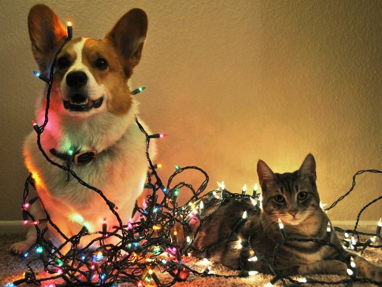 Corgi Christmas Decorations