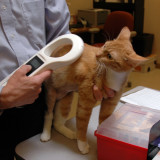 Scanning for a microchip