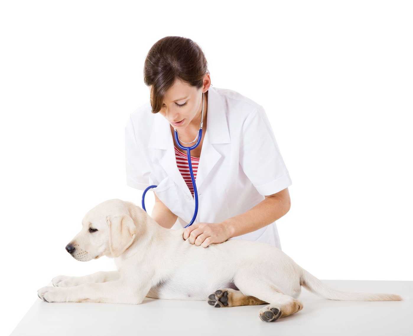 Vetco dog checkup