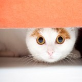 Tips to Make Your Cat's Visit to the Vet Less Stressful