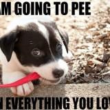 veterinarian pet urine