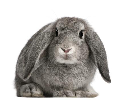exotic animals rabbit albuquerque veterinarian