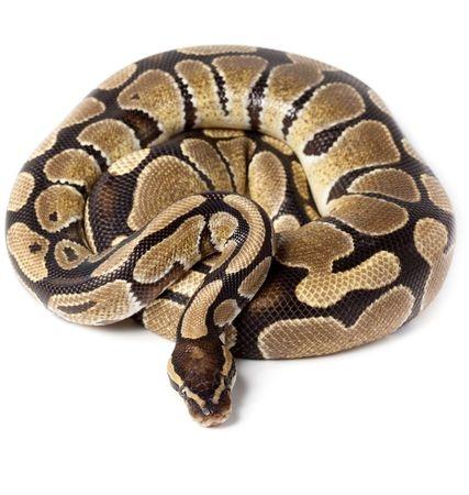 exotic animals snake albuquerque veterinarian