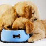 albuquerque puppy eating fast