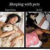 sleeping with pets albuquerque