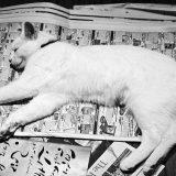 albuquerque veterinary clinic, cats sleep on newspaper