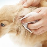 make your own dog ear cleaner
