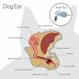 Hey Albuquerque! Time to Clean Your Dog's Ears!
