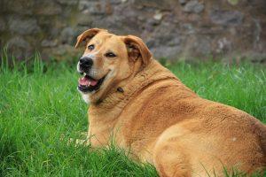 overweight dog albuquerque
